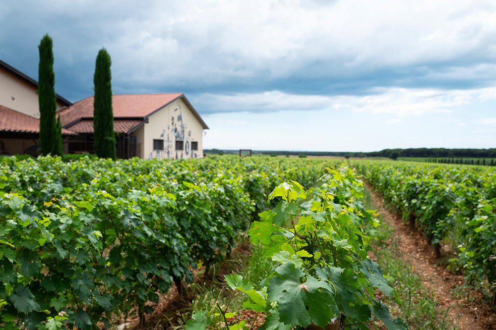 Le Macchiole - Vineyards